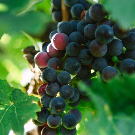 Australian Viinit