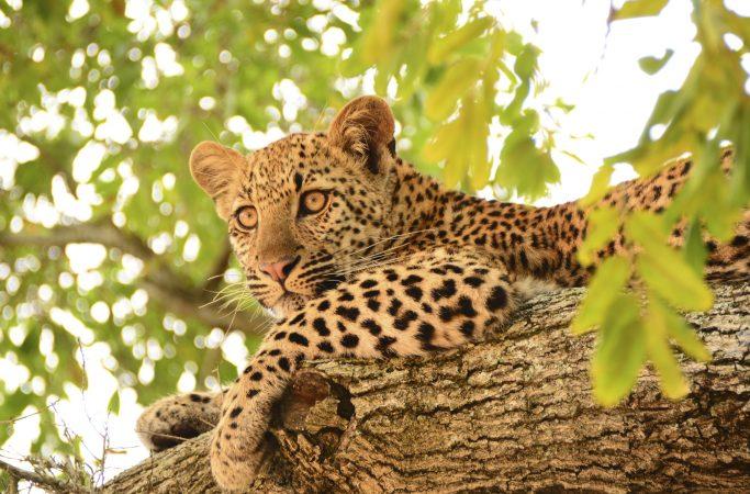 Etelä-Afrikka safari