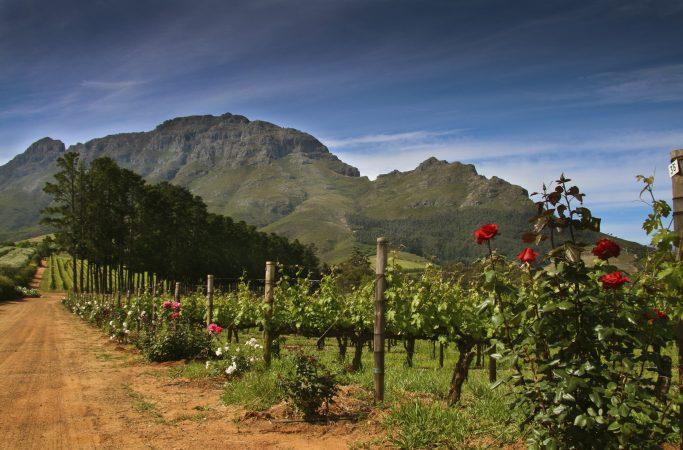 Etelä-Afrikka viini