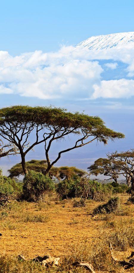 Kenia safari savanni
