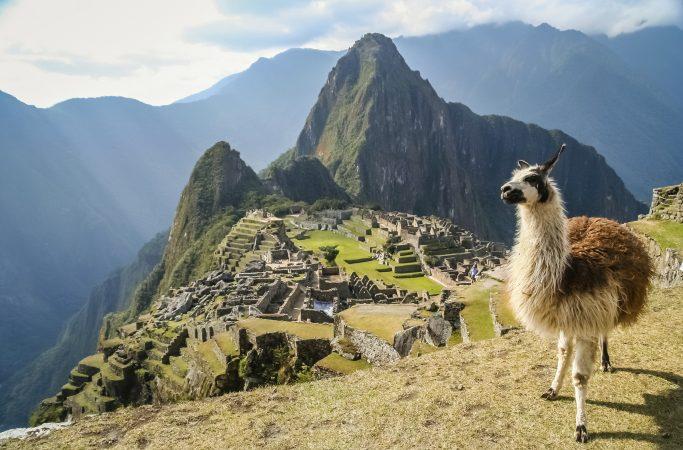 Peru Machu Picchu laama