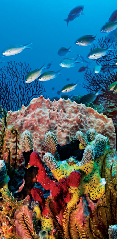 Karibia Saint Lucia koralleja