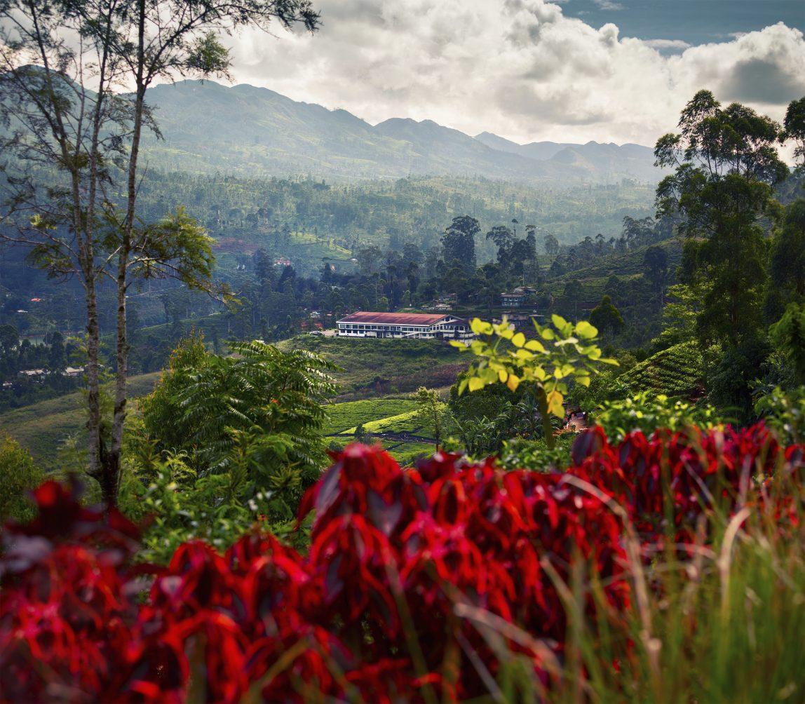Sri Lanka teeplantaasi