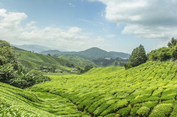 Sri Lanka teeviljely