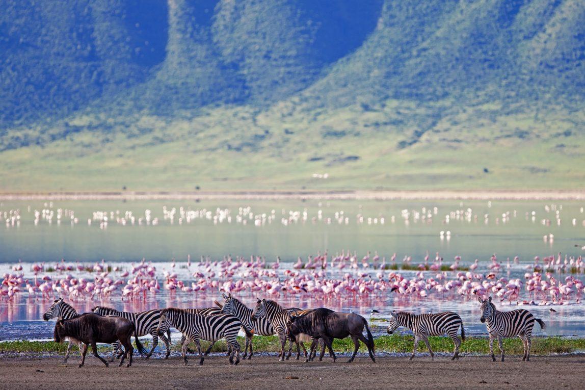 Tansania safari seepra ja flamingo