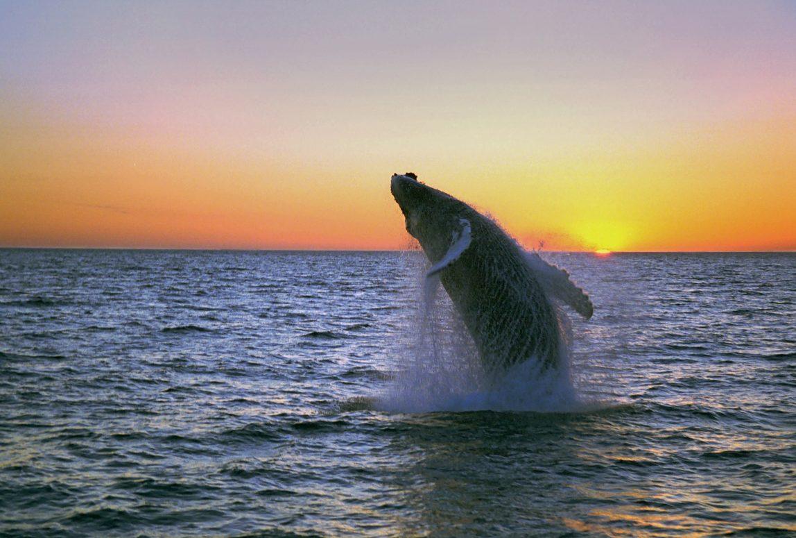 Islanti valas