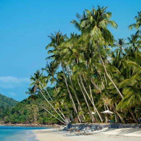 Thaimaa Koh Samui palmuranta