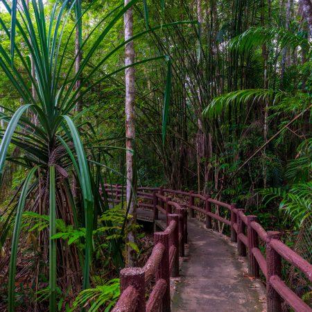Thaimaa Krabi viidakko