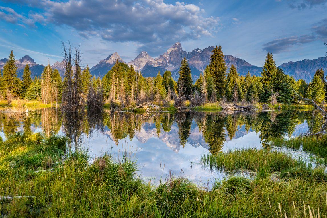 USA Grand Teton kansallispuisto metsä