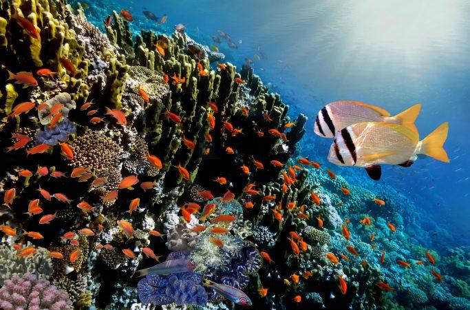 Seychellit Silhouette sukellus
