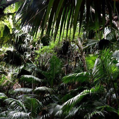 Seychellit Praslin viidakko