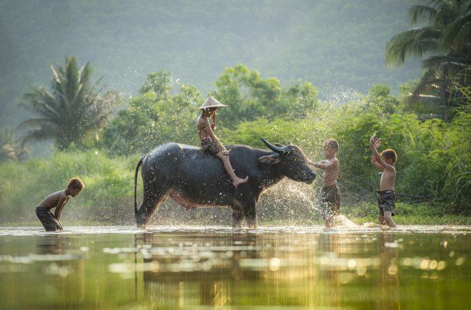 Kamboza vesipuhveli
