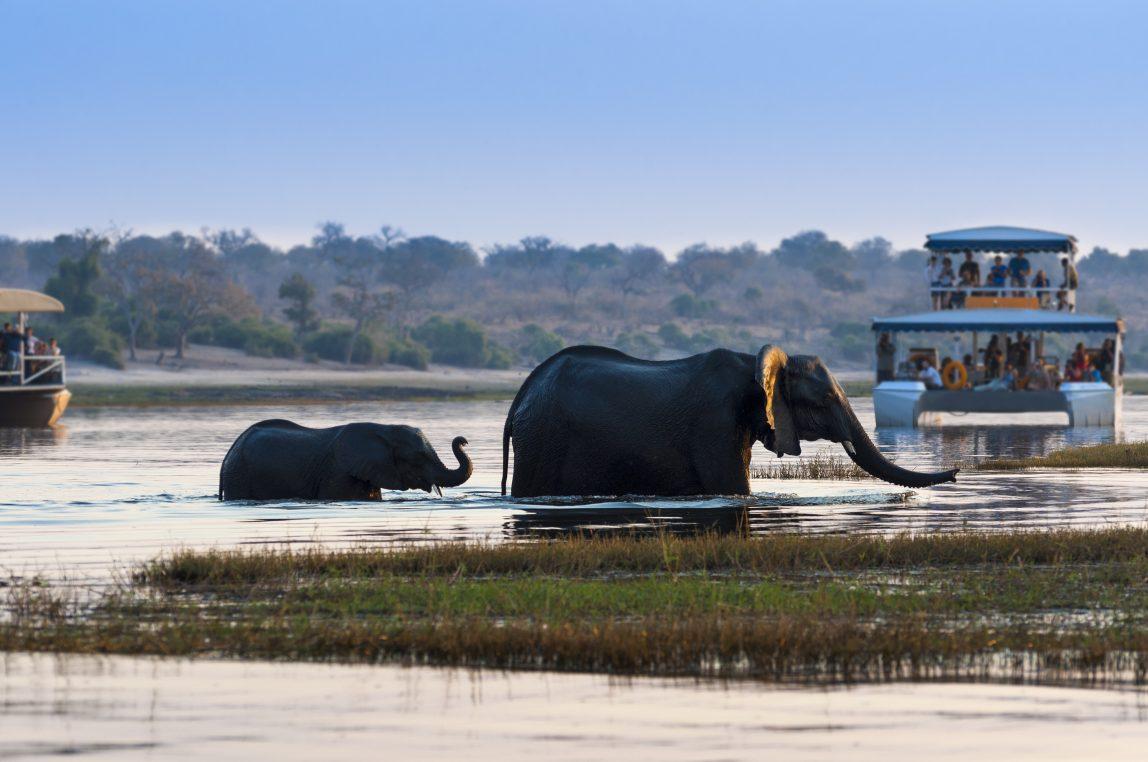 Botswana norsuja