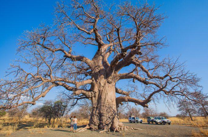Botswana savanni
