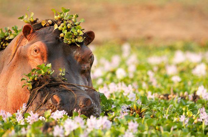 Botswana Sambesi virtahepo