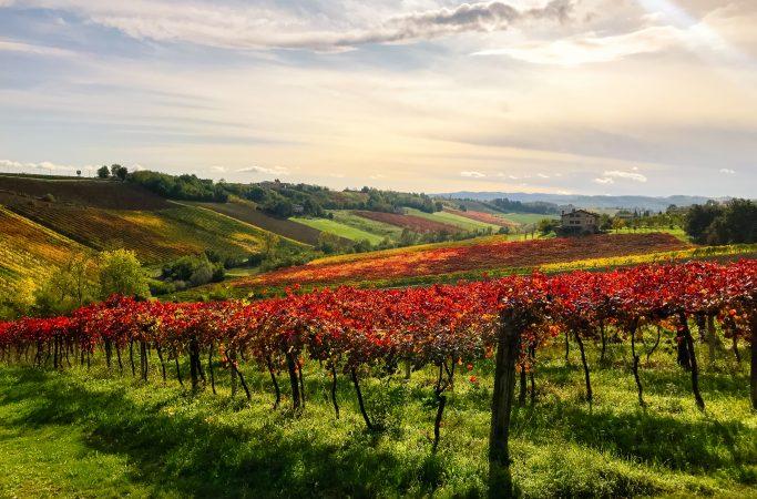 Italia Emiglia Romana viinitarha