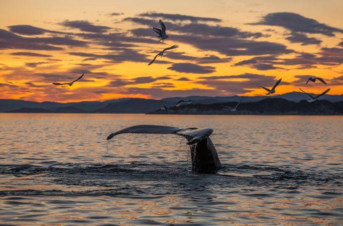 Grönlanti valas