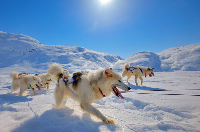 Grönlanti koiravaljakko